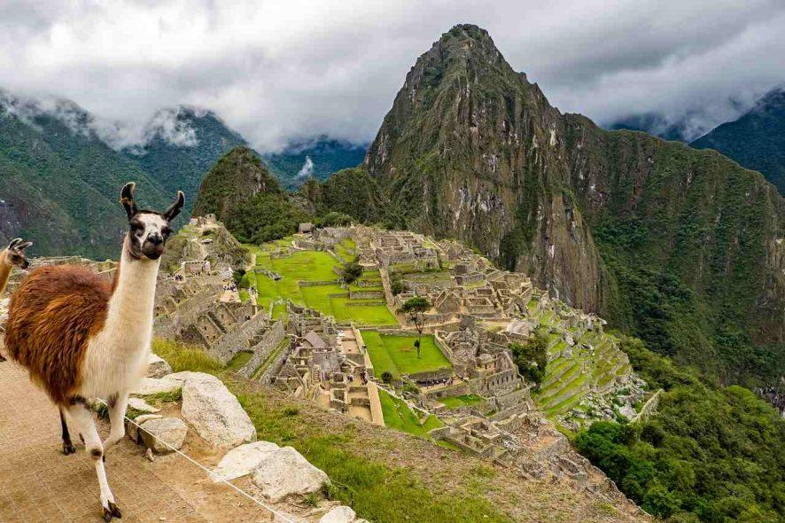 Cabra fotografada com o Machu Picchu, no Perú, em fundo. Foto de Pixabay