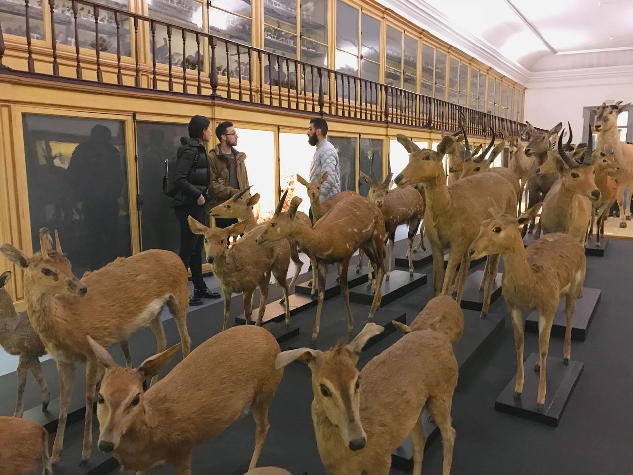 Animais embalsamados no Museu da Ciência da Universidade de Coimbra. Foto de Diogo Pereira