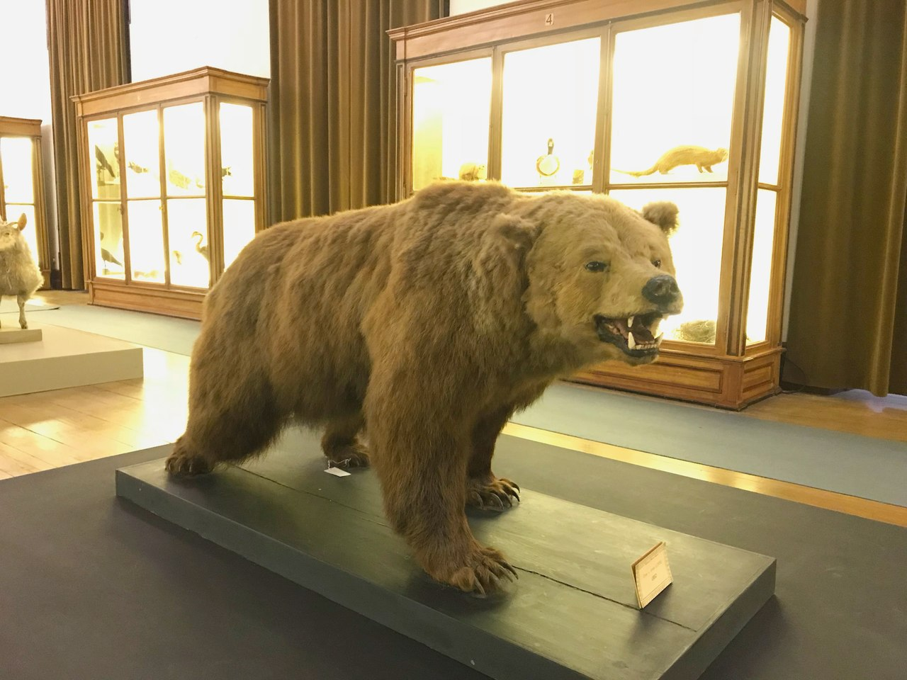Urso embalsamado em exposição no Museu da Ciência da Universidade de Coimbra. Foto de Diogo Pereira