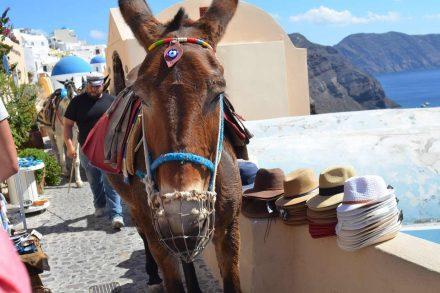 Burro usado para passeios turísticos na ilha grega de Santorini. Foto de Pixabay
