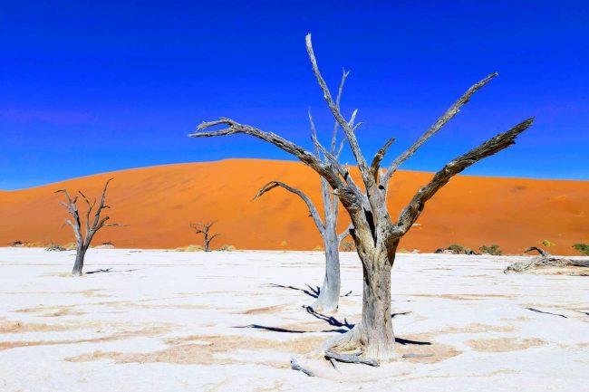 Árvores secas no deserto da Namíbia. Foto de Rita Cerveira Martins