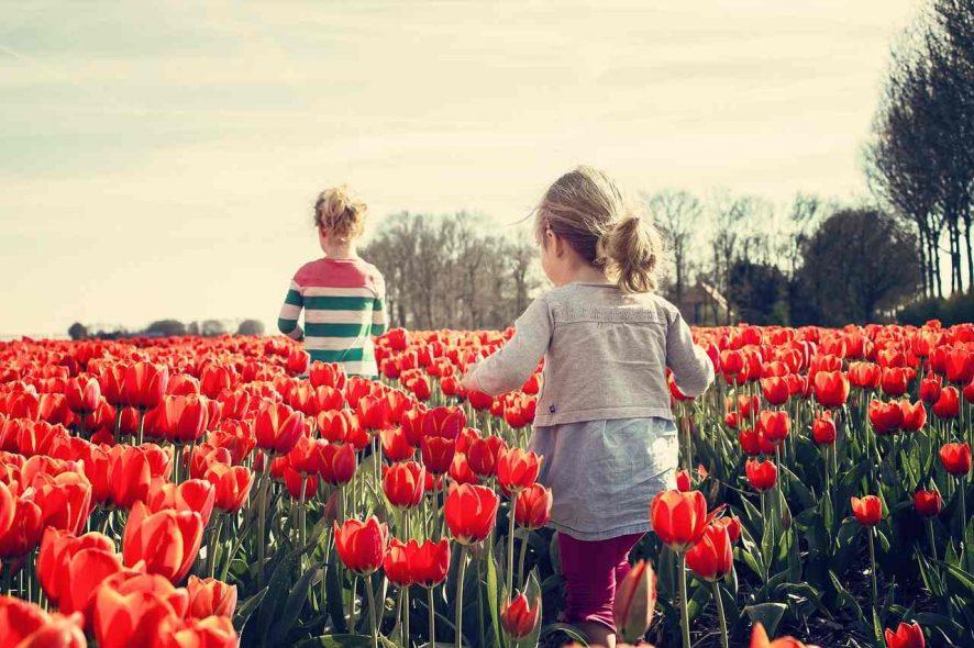 Crianças a brincar em campos de tulipas na Holanda durante a primavera. Foto de Pixabay