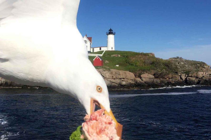 Gaivota rouba sandwich da mão de uma mulher junto a uma praia