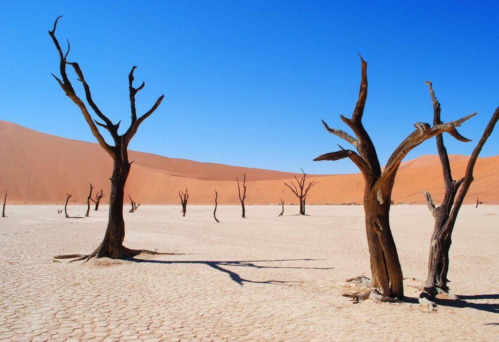 Árvores secas no deserto da Namíbia. Foto de Pixabay