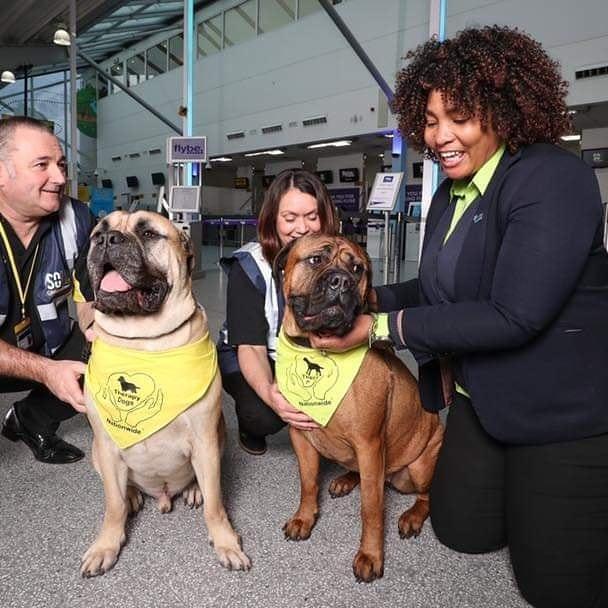 Aeroporto de Southampton usa cães para tranquilizar passageiros 3. foto de Therapy Dogs Nationwide