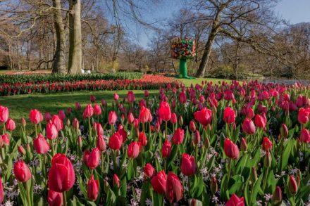 Flores no Keukenhof, Paises Baixos