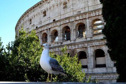 Gaivota pousada em cima de um muro em frente ao Coliseu de Roma