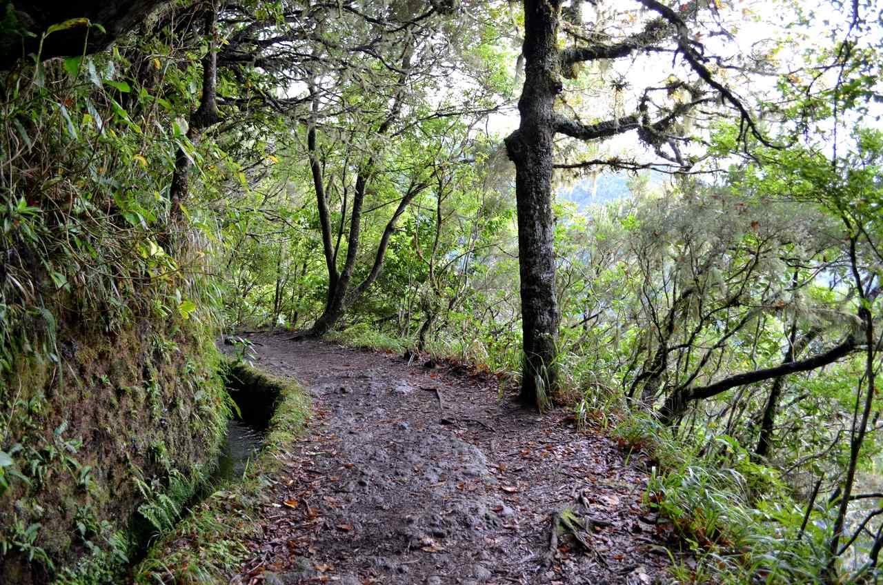 Levada do Caldeirão Verde na Madeira 1