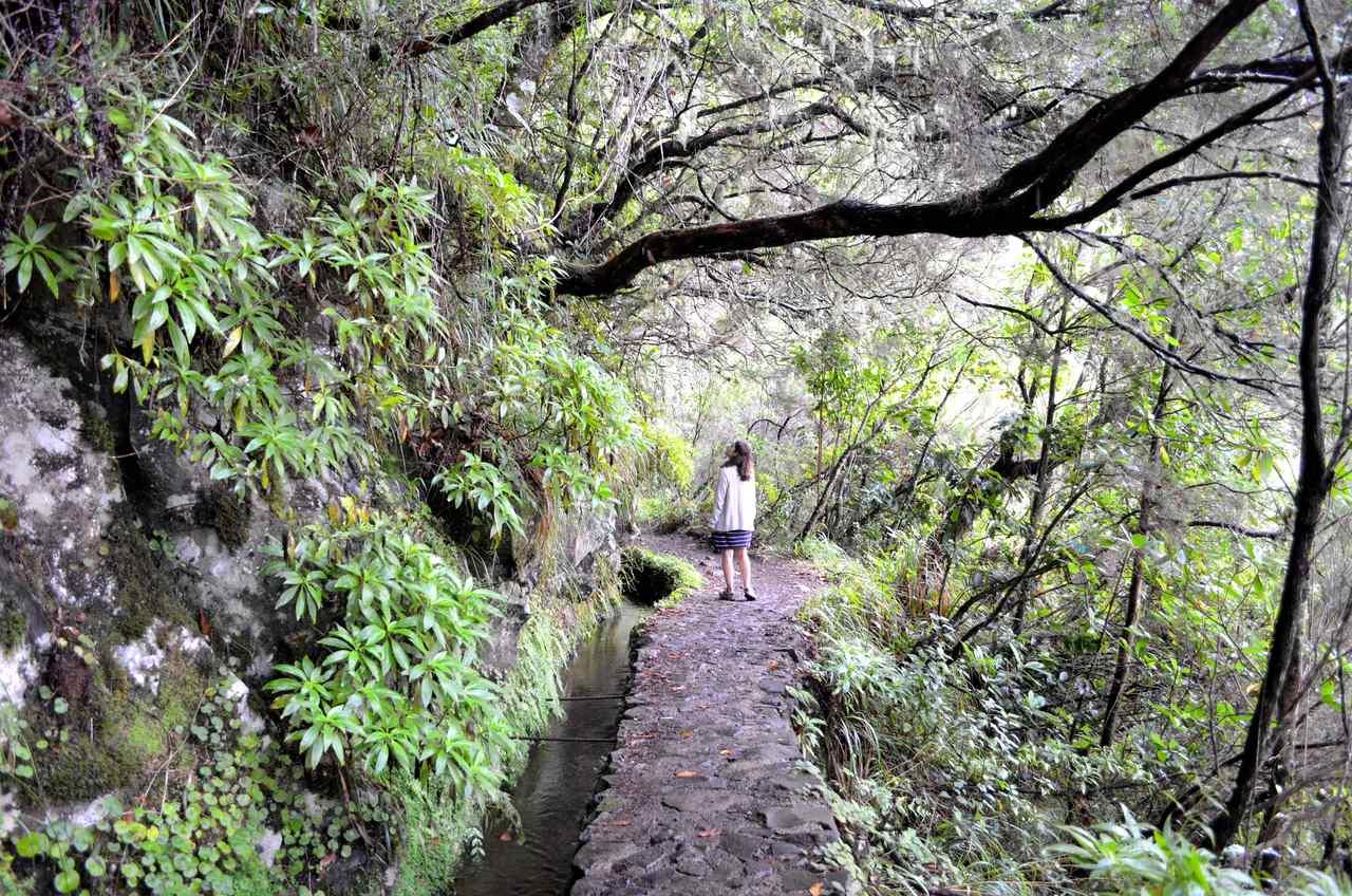 Levada do Caldeirão Verde na Madeira 2