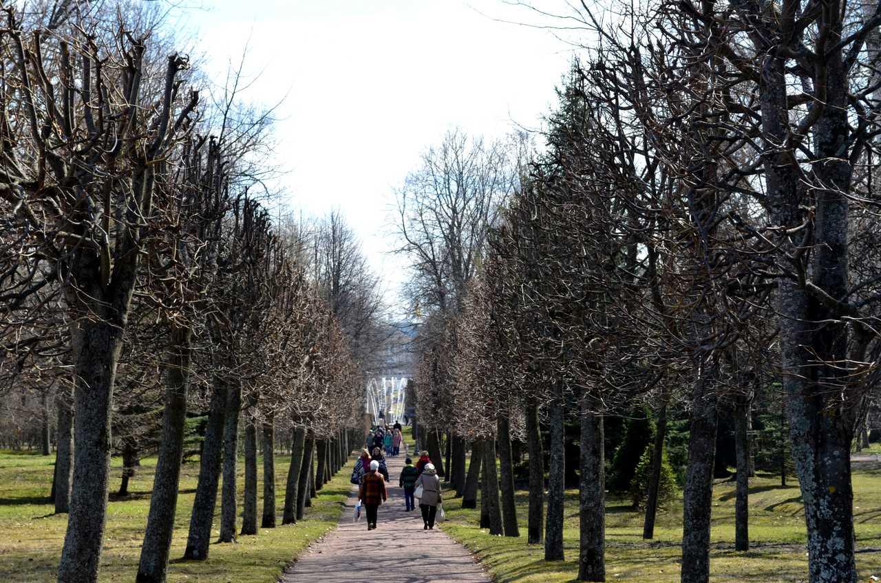 Jardins do Palácio Peterof Sao Petersburgo Russia