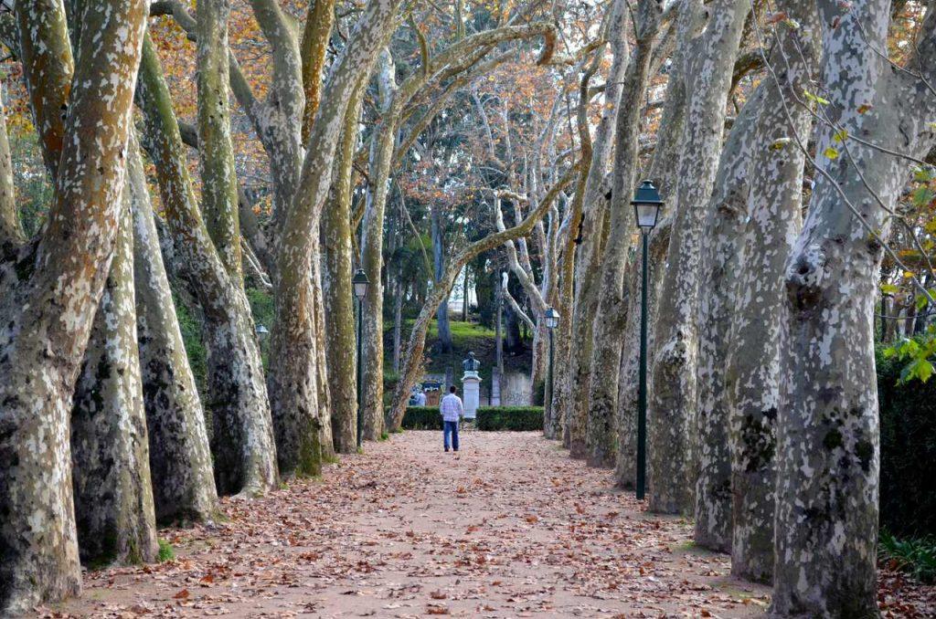 Árvores no Parque D. Carlos I nas Caldas da Rainha