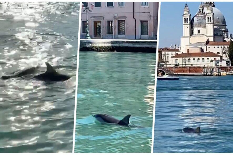 golfinhos em veneza colagem