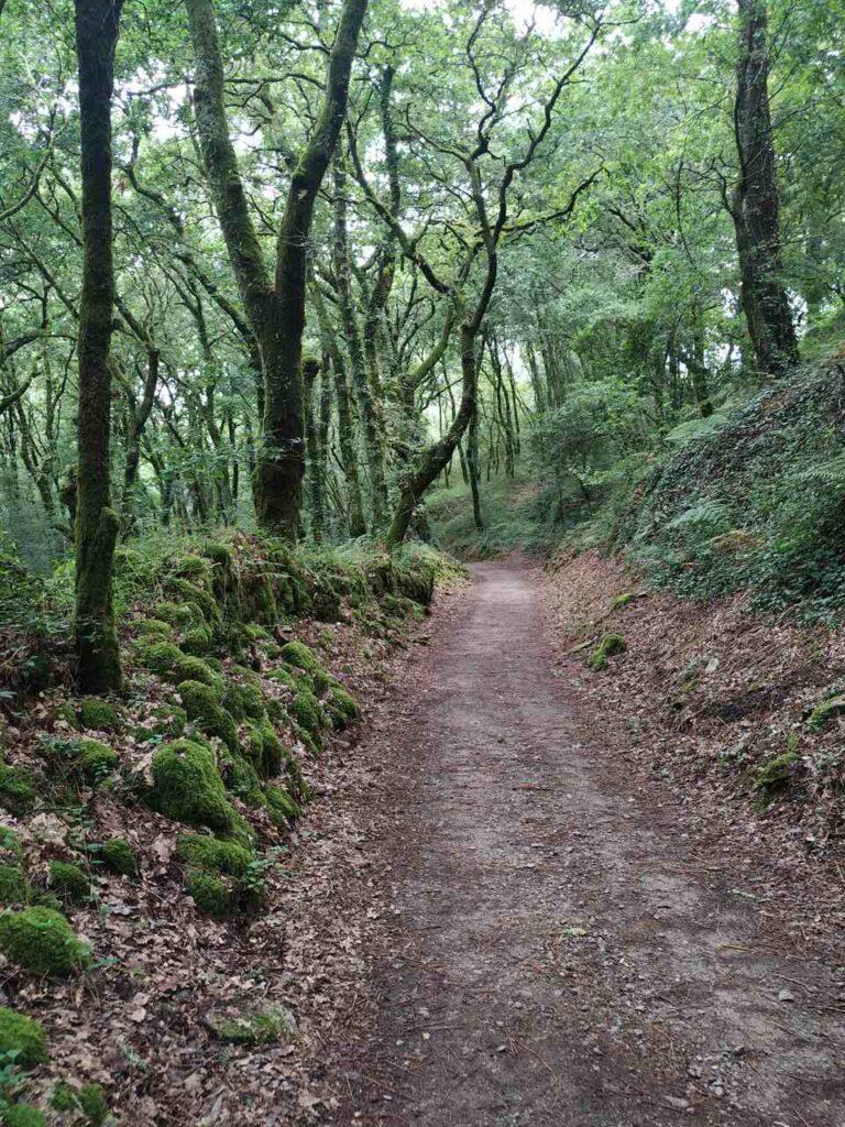 Bosques encantados Caminho de Santiago