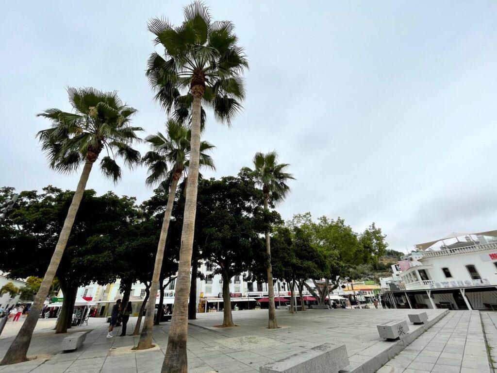 Palmeiras na Praça da Cidade Velha em Albufeira